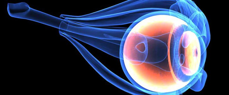 Doctors and medical centres specialising in Posterior eye segment